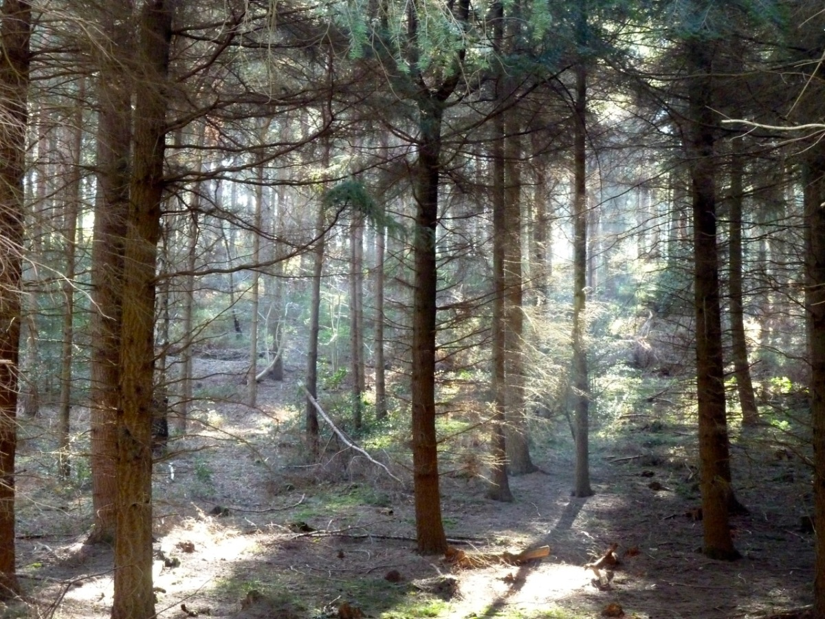 Durford Wood-2