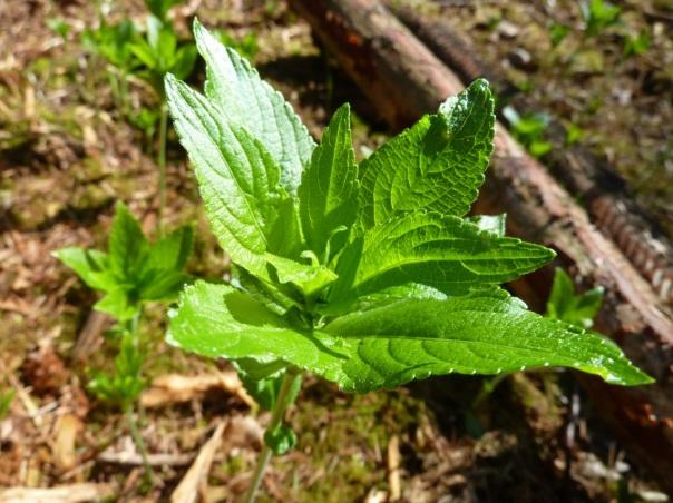 Spring leaves-2