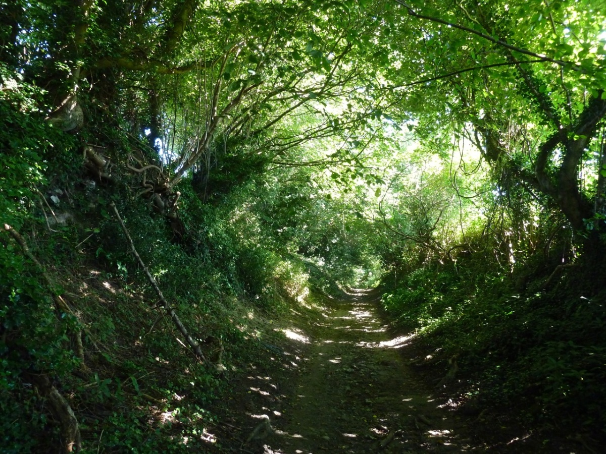 Lane to Sroud from Ramsdean