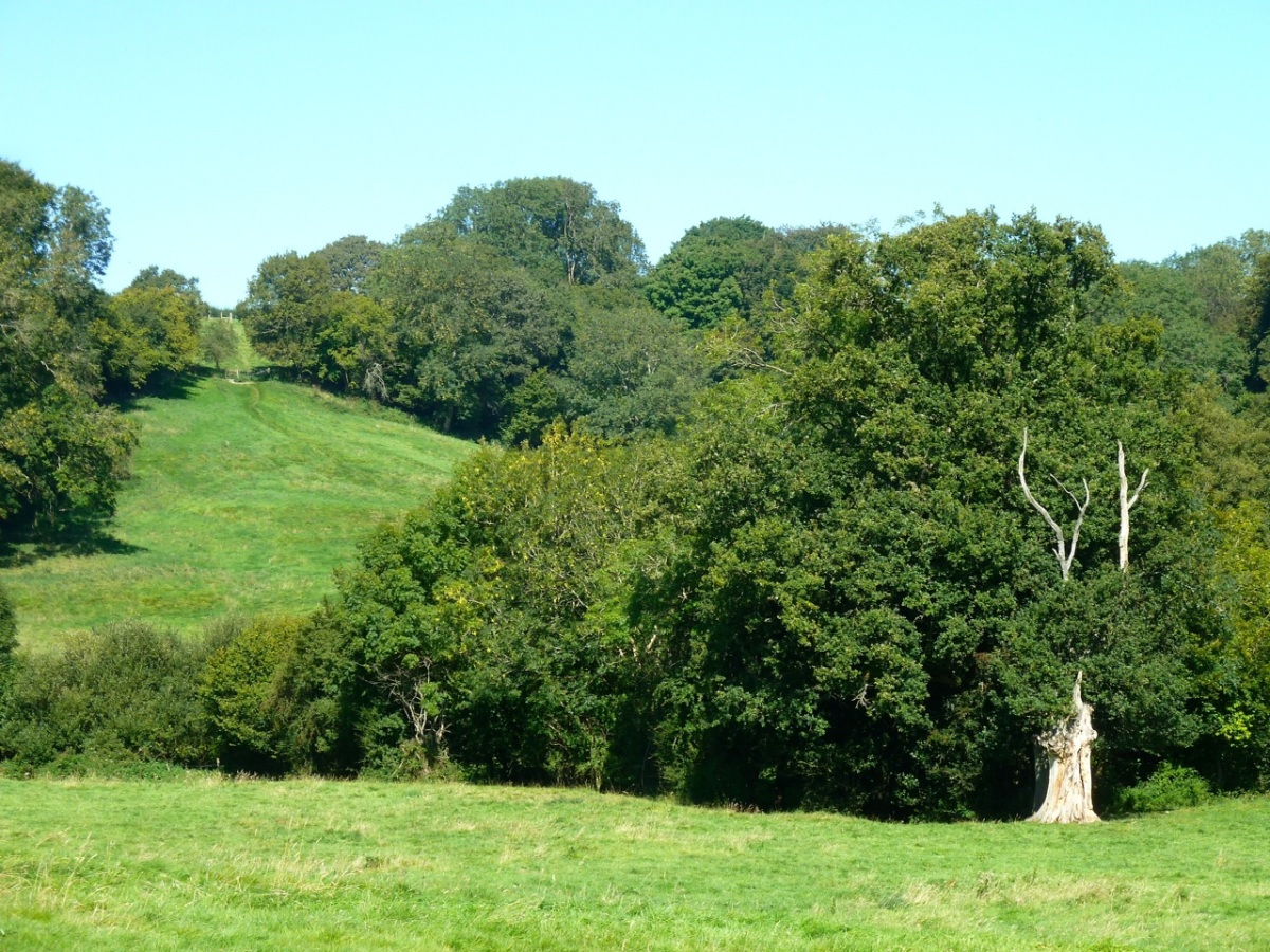 Meadows near Ramsdean