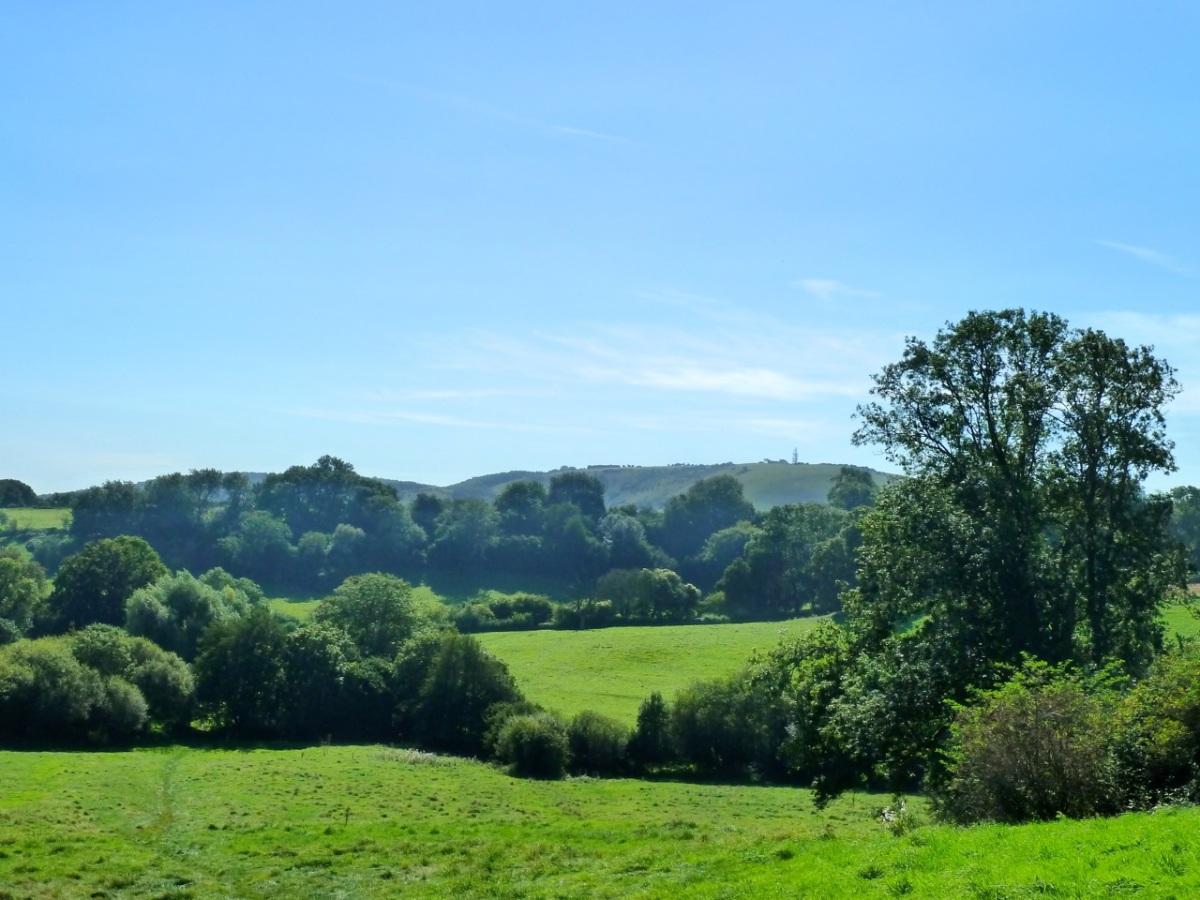 Toward Butser Hill
