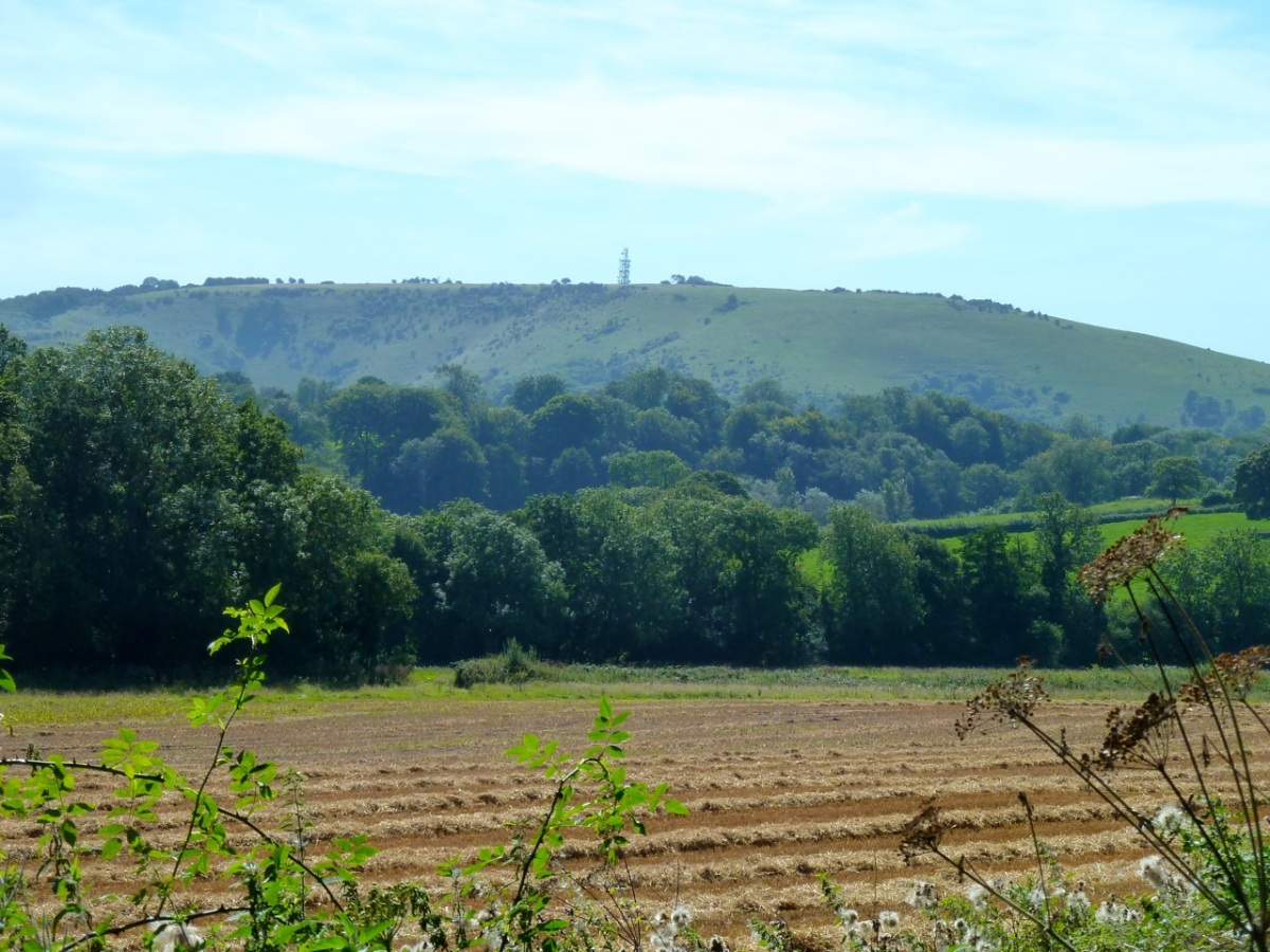 Butser Hill from near Langrish