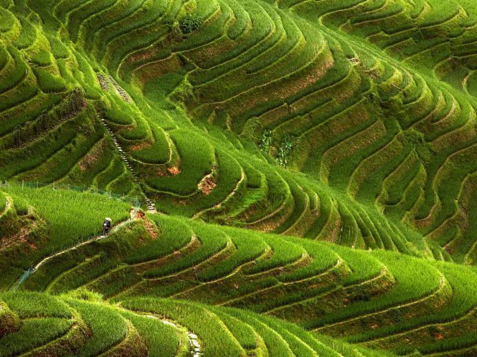 Terraced-Fields