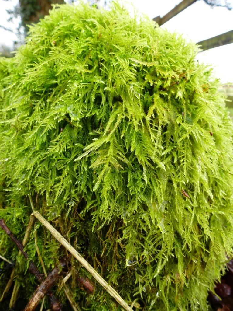 Fresh moss