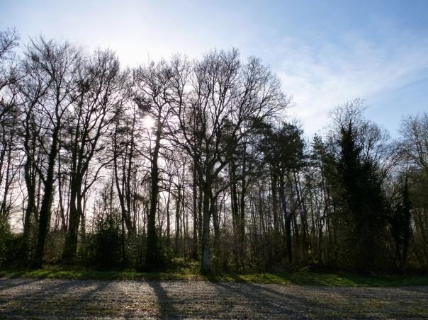 Park Wood Hambledon