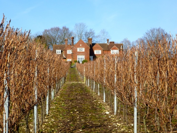 Hambledon vineyards