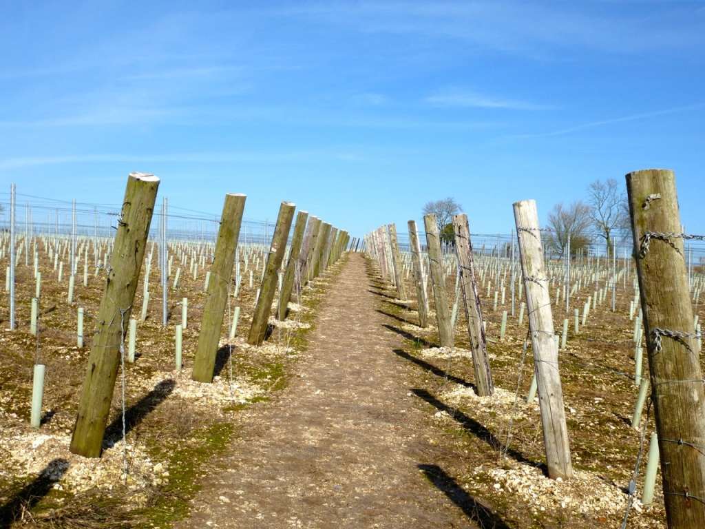 Vineyard footpath