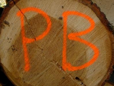 PB on timber