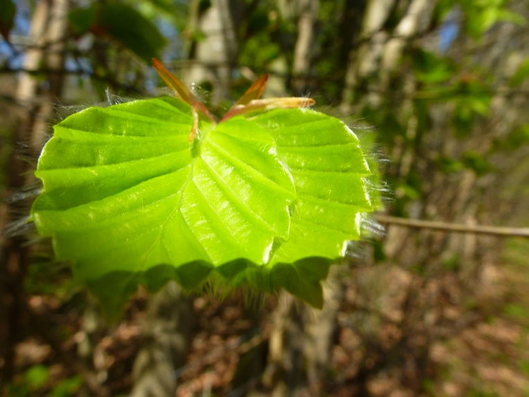 Light on young leaf