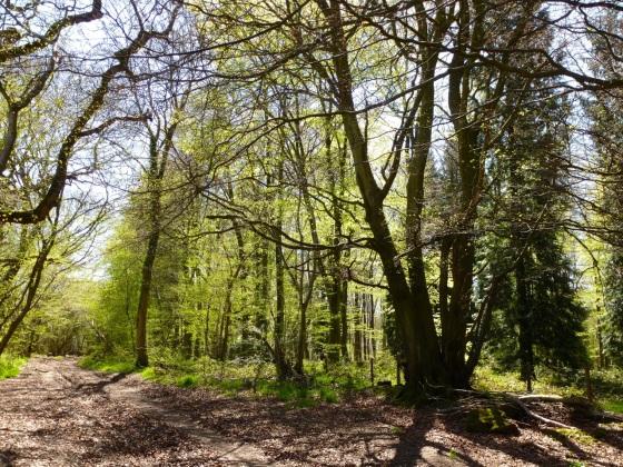 Cheriton Wood
