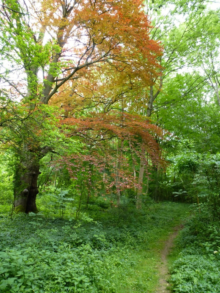 Westbury Park Woods