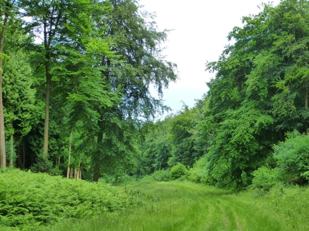 Hen Wood Meon Valley