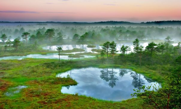 Estonia lakes mist trees