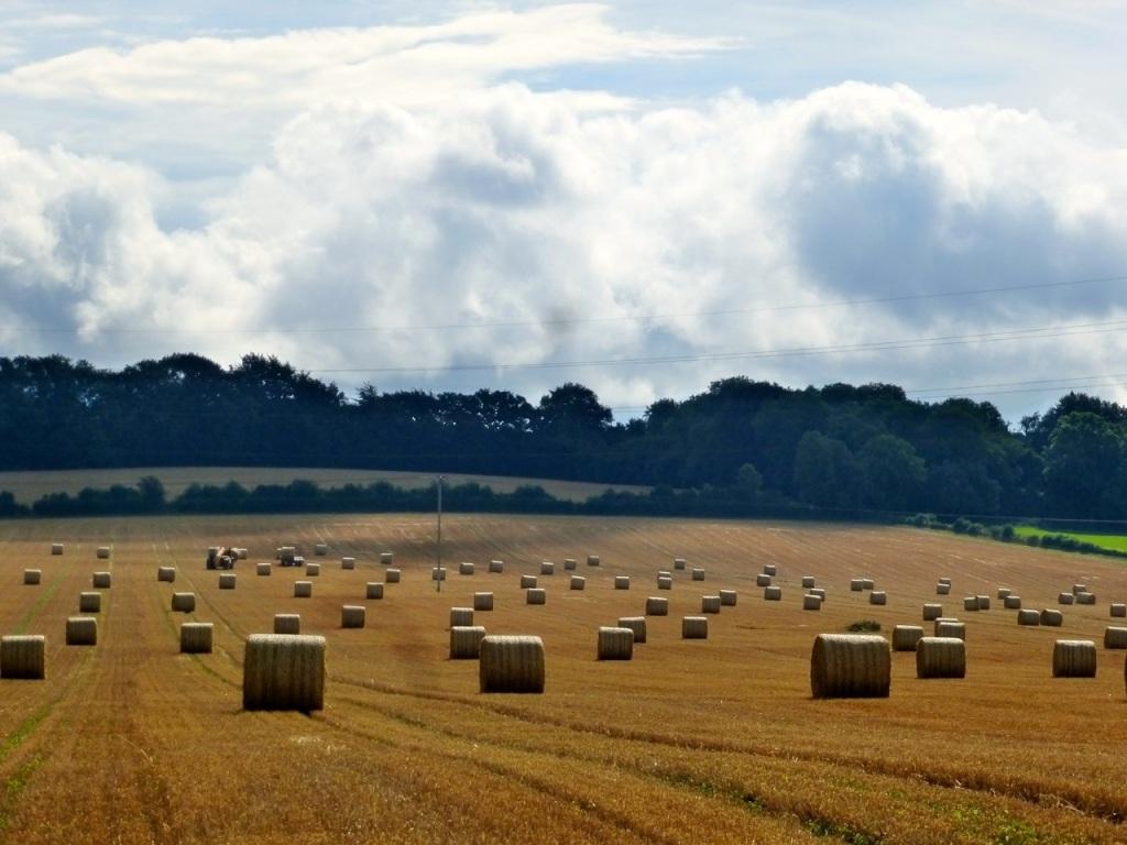 Hay Field, Round Bales