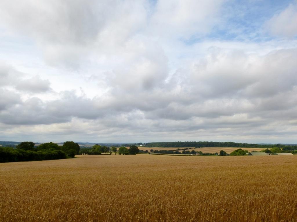 Near Lyeway Farm
