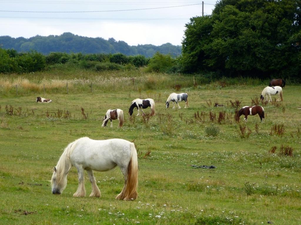 Horse Paddock