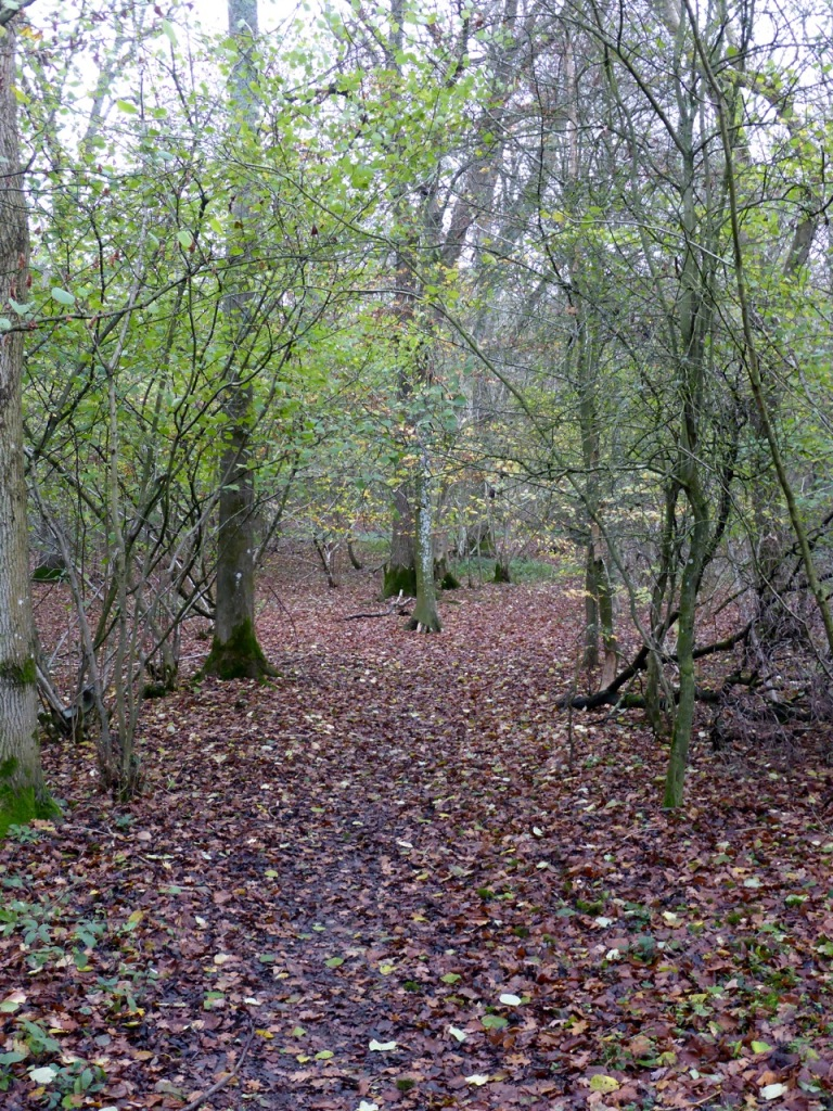 Sutton Beech Wood, Gundleton