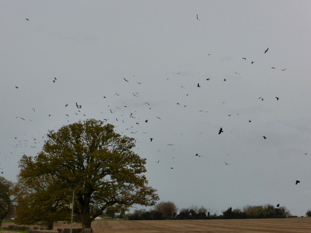 A Murder, Horde, Parcel, or Storytelling of Crows