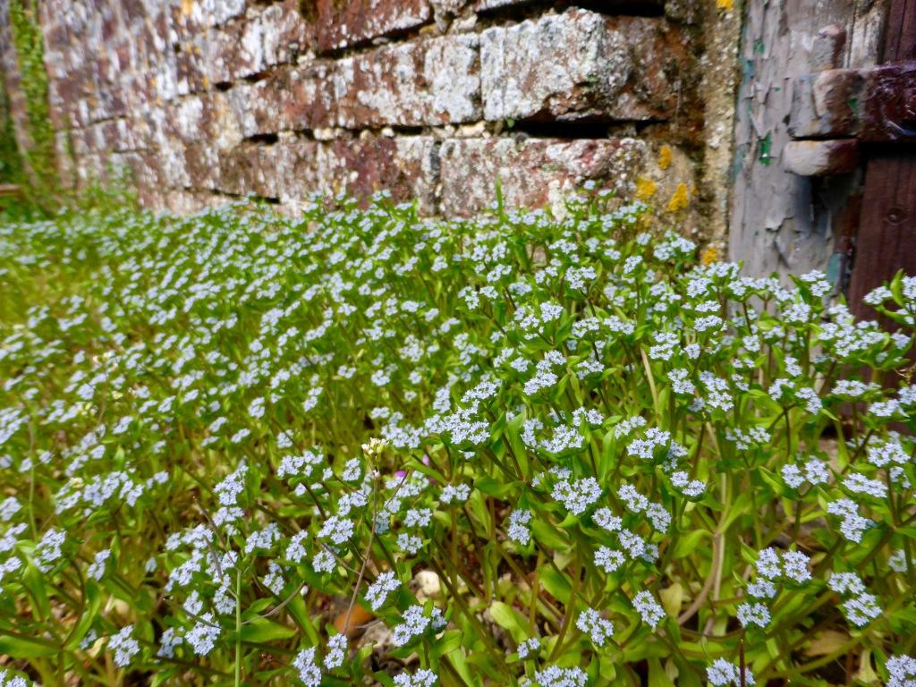 Unknown Pretty Weeds