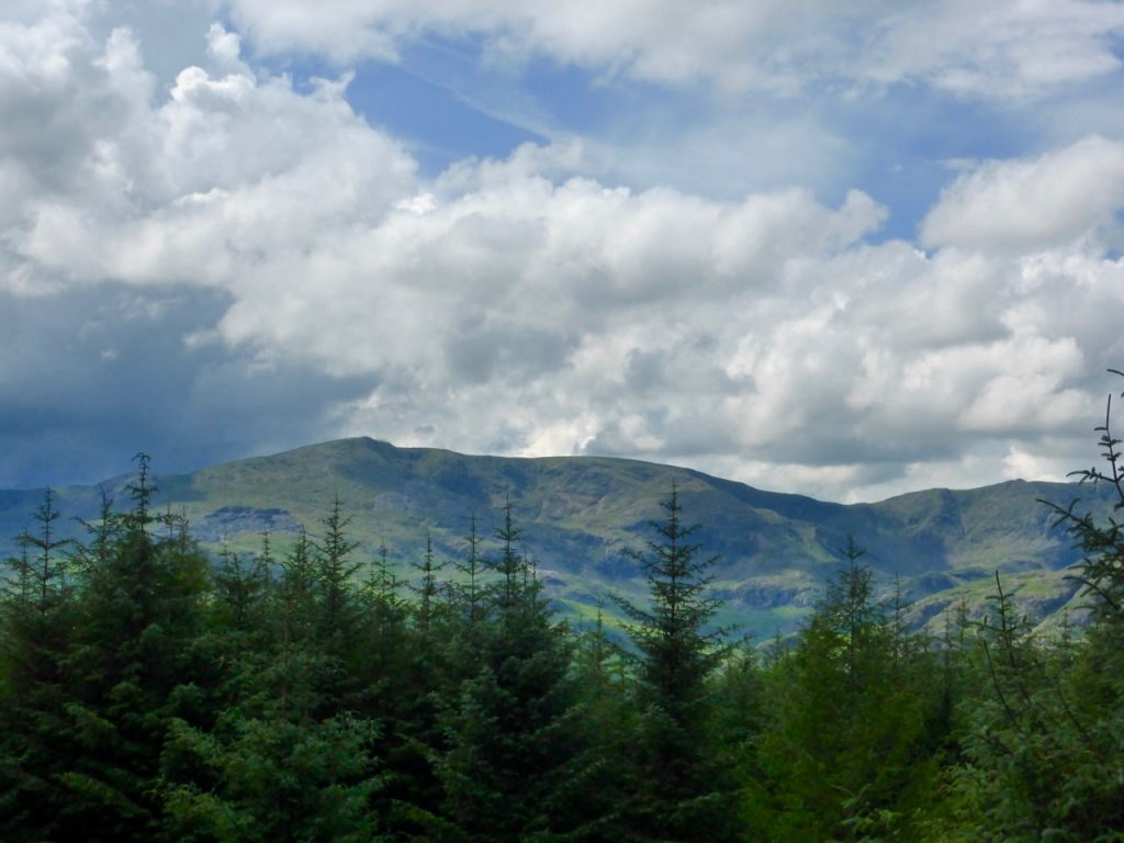 Coniston Fells from Grizedale