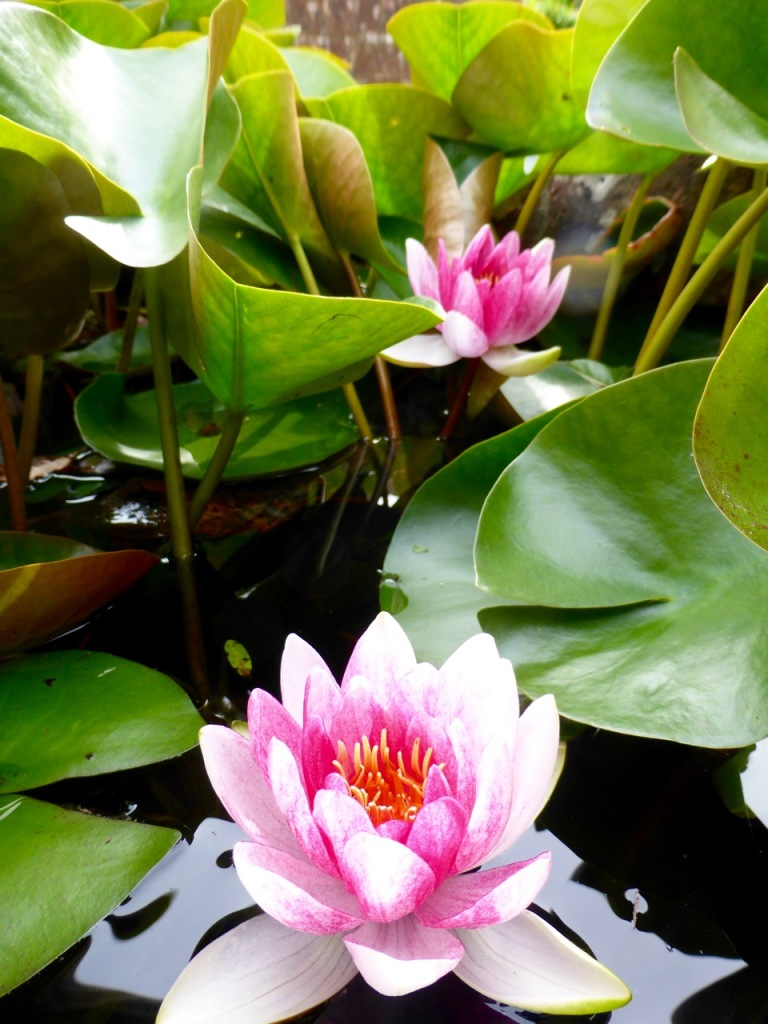 Lilyflowers