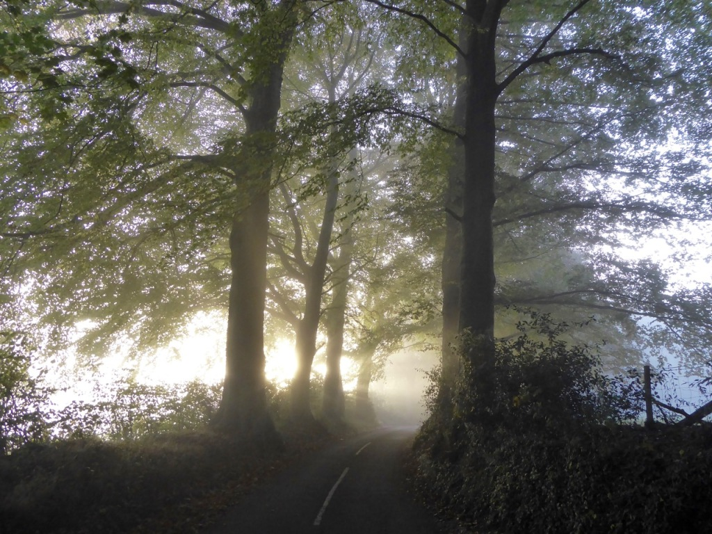 Mist and light through trees