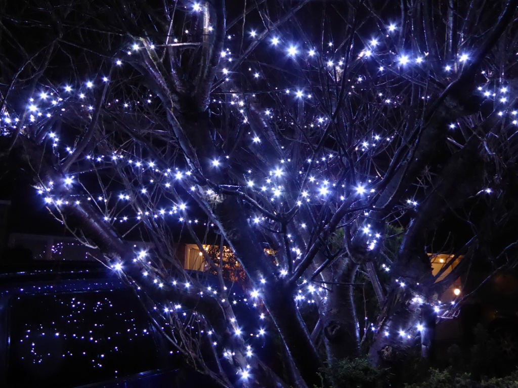 Christmas lights in garden tree