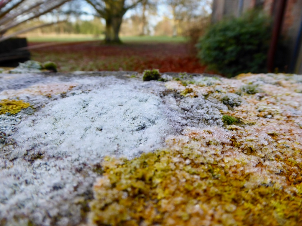 Frost and lichen